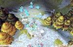 Warcraft, скриншот, 101KB