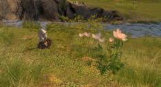 The Guild 2     скриншот, 143KB