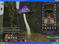 EverQuest II, скриншот, 87KB